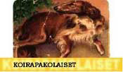 Koirapakolaiset - the Dog Refugees