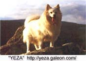 Image of Yeza