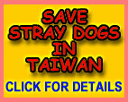 Save Stray Dogs In Taiwan