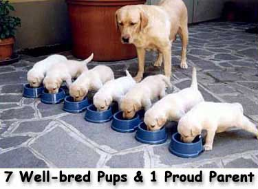 well-bred
